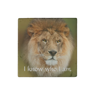Un león majestuoso imán de piedra