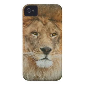 Un león majestuoso iPhone 4 Case-Mate protectores