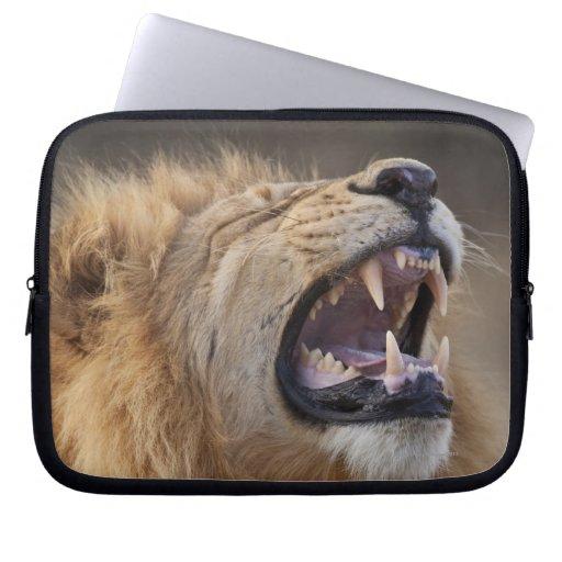 Un león masculino maduro (Panthera leo) en el Savu Funda Portátil