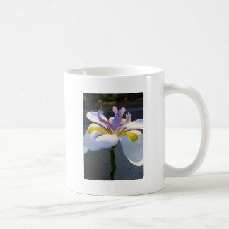 Un lirio magnificient .jpg tazas de café