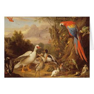 Un Macaw, patos, loros y otros pájaros en tierras Tarjetas