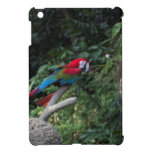 Un Macaw verde y azul rojo en una rama