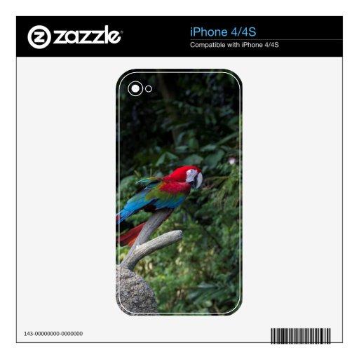 Un Macaw verde y azul rojo en una rama iPhone 4 Skins