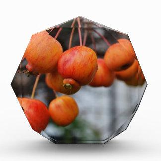 Un manojo de manzanas rojas del otoño