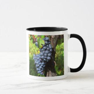 Un manojo de merlot maduro de las uvas en una vid
