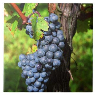 Un manojo de merlot maduro de las uvas en una vid  azulejo cuadrado grande