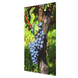 Un manojo de merlot maduro de las uvas en una vid  lona estirada galerías