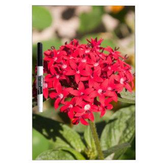 Un manojo de pequeñas flores rojas pizarras
