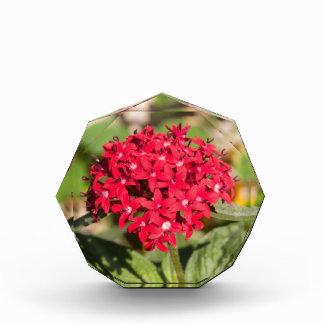 Un manojo de pequeñas flores rojas