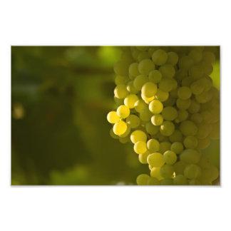 Un manojo de uvas blancas fotos