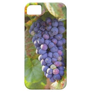 Un manojo de uvas del pinot negro en un Chambertin Funda Para iPhone 5 Barely There