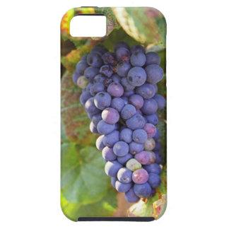 Un manojo de uvas del pinot negro en un Chambertin Funda Para iPhone 5 Tough