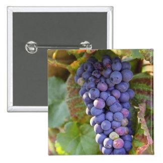 Un manojo de uvas del pinot negro en un Chambertin Pin Cuadrado