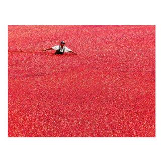 Un mar de arándanos rojos postal