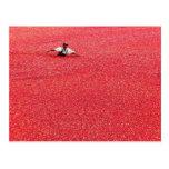 Un mar de arándanos rojos tarjetas postales