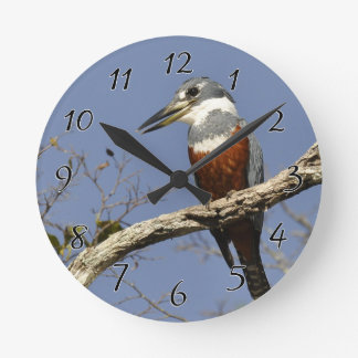 Un martín pescador se encarama en una rama de un reloj redondo mediano