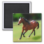 Un medio galope de los caballos iman
