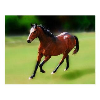 Un medio galope de los caballos postales