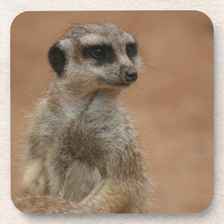 Un Meerkat bebe simplemente el práctico de costa Posavasos