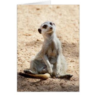 Un meerkat que se sienta tarjeta de felicitación