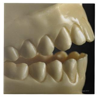 Un modelo dental azulejo cuadrado grande