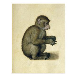 Un mono postales
