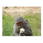 Un mono que goza de un cono de helado postal