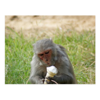 Un mono que goza de un cono de helado tarjeta postal