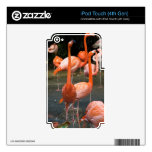 Un número de flamencos iPod touch 4G skins
