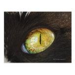 Un ojo de gato tarjetas postales