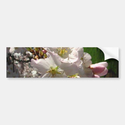 Un Opened Blossom Bumper Stickers
