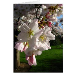 Un Opened Blossom Card