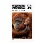 Un orangután de la madre y del bebé comparte un envio