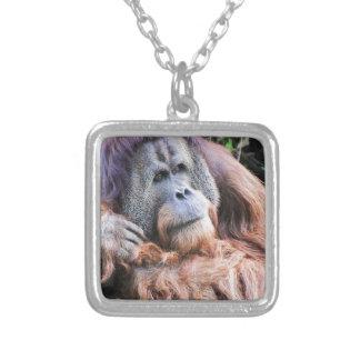 Un orangután nombrado Henry Collar