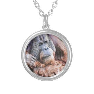 Un orangután nombrado Henry Grimpolas