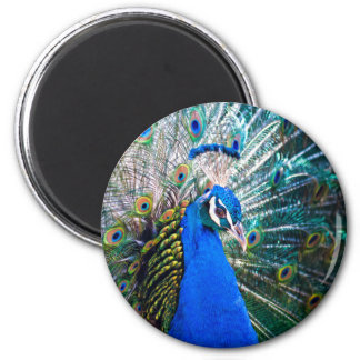 Un orgullo del pájaro imán redondo 5 cm