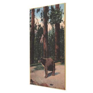Un oso de Brown en las maderas Impresiones En Lienzo Estiradas