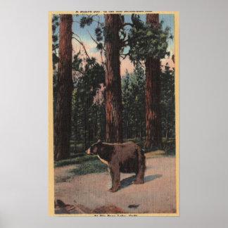 Un oso de Brown en las maderas Impresiones