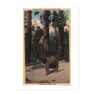 Un oso de Brown en las maderas Postal