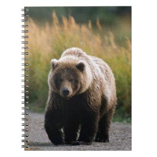 Un oso de Brown que camina en un rastro Libro De Apuntes Con Espiral