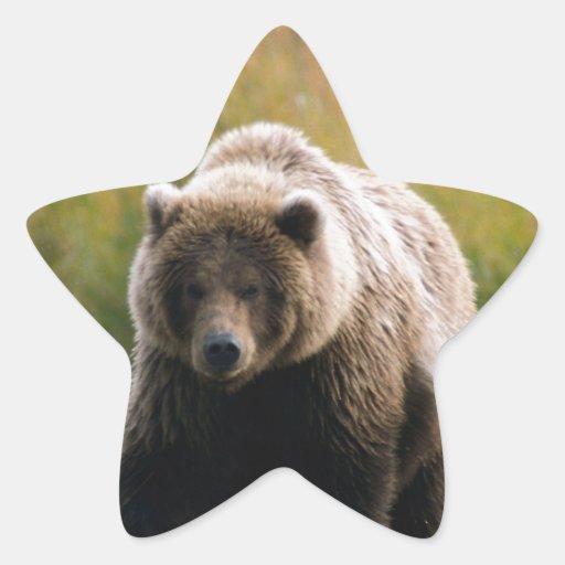 Un oso de Brown que camina en un rastro Pegatinas Forma De Estrella Personalizadas