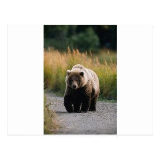 Un oso de Brown que camina en un rastro Tarjeta Postal