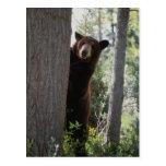 Un oso de canela postal