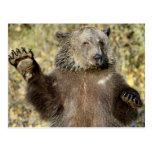 Un oso grizzly que agita postal