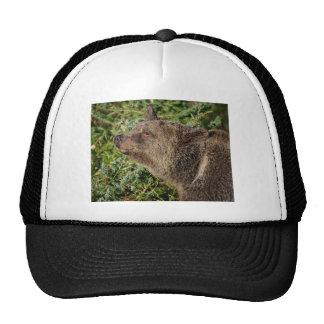 Un oso grizzly sonriente gorra