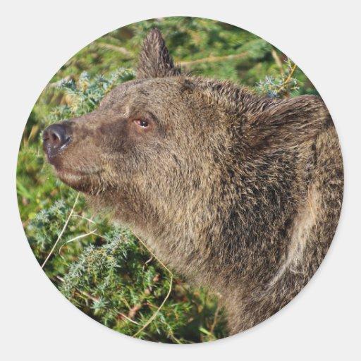 Un oso grizzly sonriente pegatinas redondas