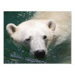 Un oso polar apenas que se enfría invitación 10,8 x 13,9 cm