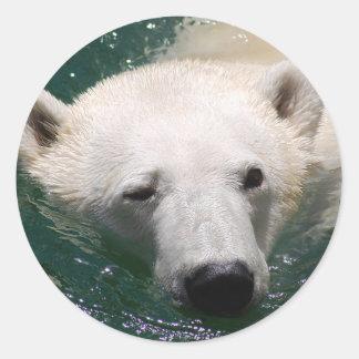 Un oso polar apenas que se enfría pegatina redonda