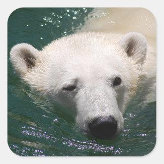 Un oso polar apenas que se enfría pegatina cuadrada