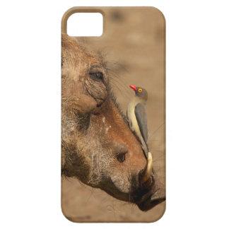 Un Oxpecker en un hocico de los warthogs, iPhone 5 Fundas